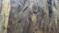 5051009-wet-tree-bark-texture-02_p006