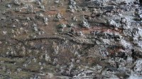 5051009-wet-tree-bark-texture-02_p016