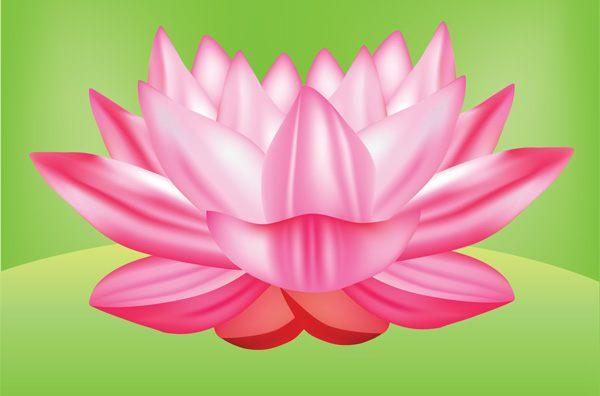 Lotus flower vector graphic free 123freevectors lotus flower vector graphic free mightylinksfo