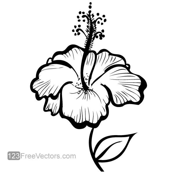 hand drawn hibiscus flower vector 123freevectors. Black Bedroom Furniture Sets. Home Design Ideas