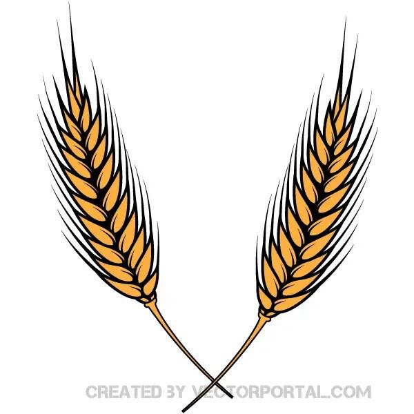 wheat vector illustrator 123freevectors rh 123freevectors com wheat vector art wheat vector download