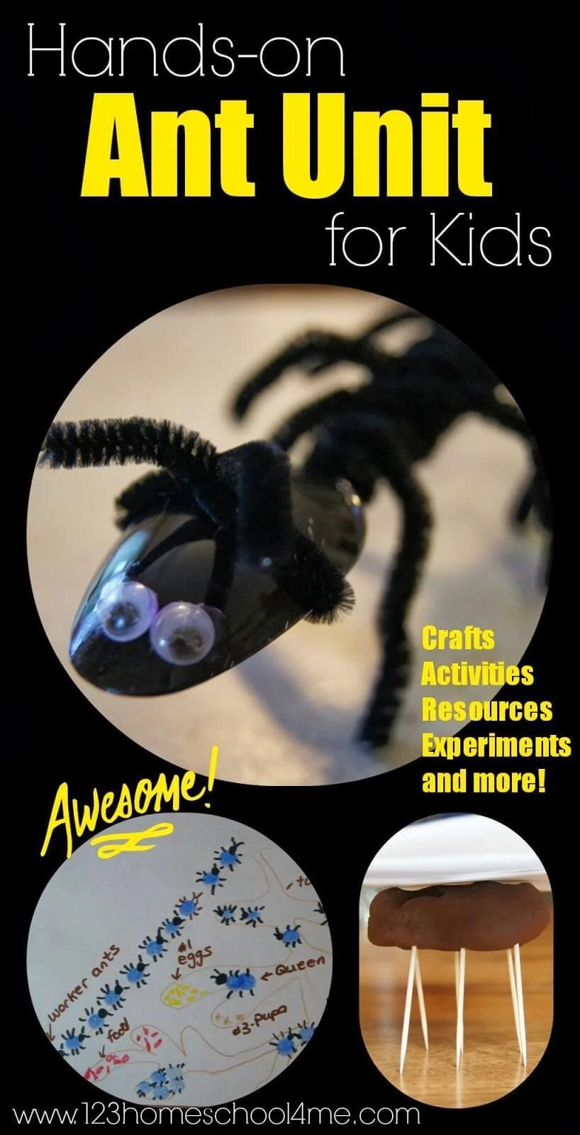 medium resolution of Ant Lesson For Kids