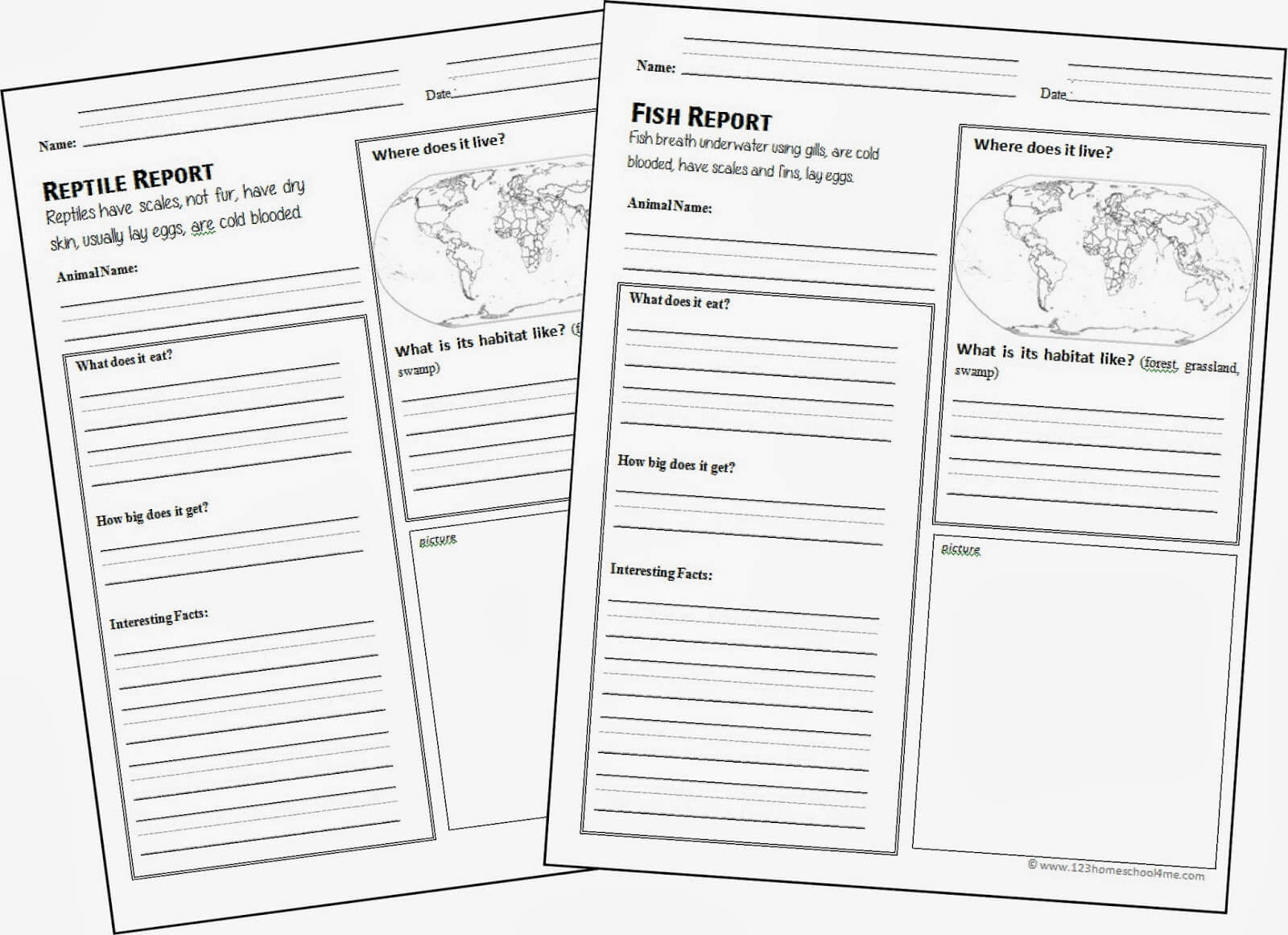 hight resolution of FREE Animal Report Template