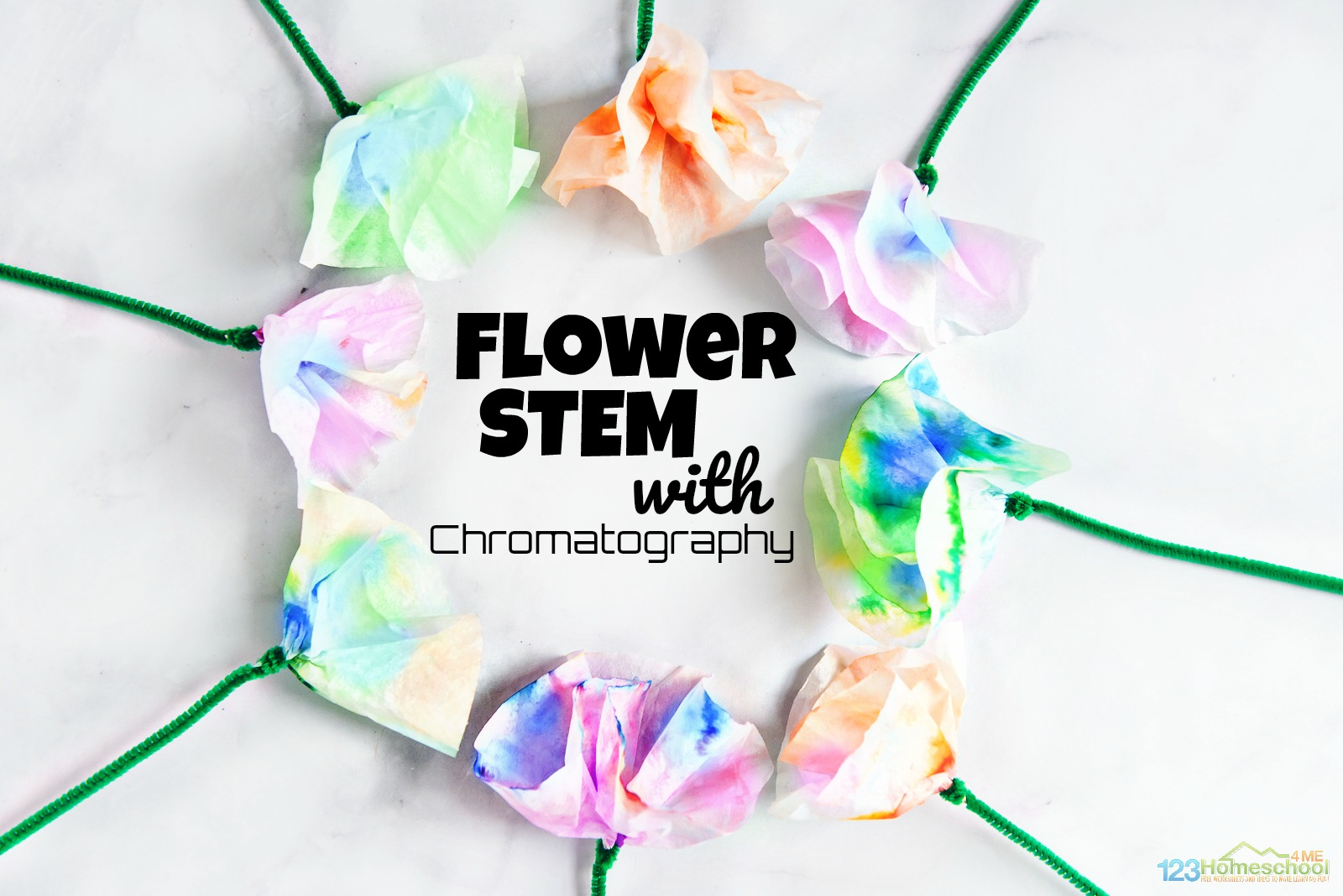 Beautiful Chromatography Flowers Science Project