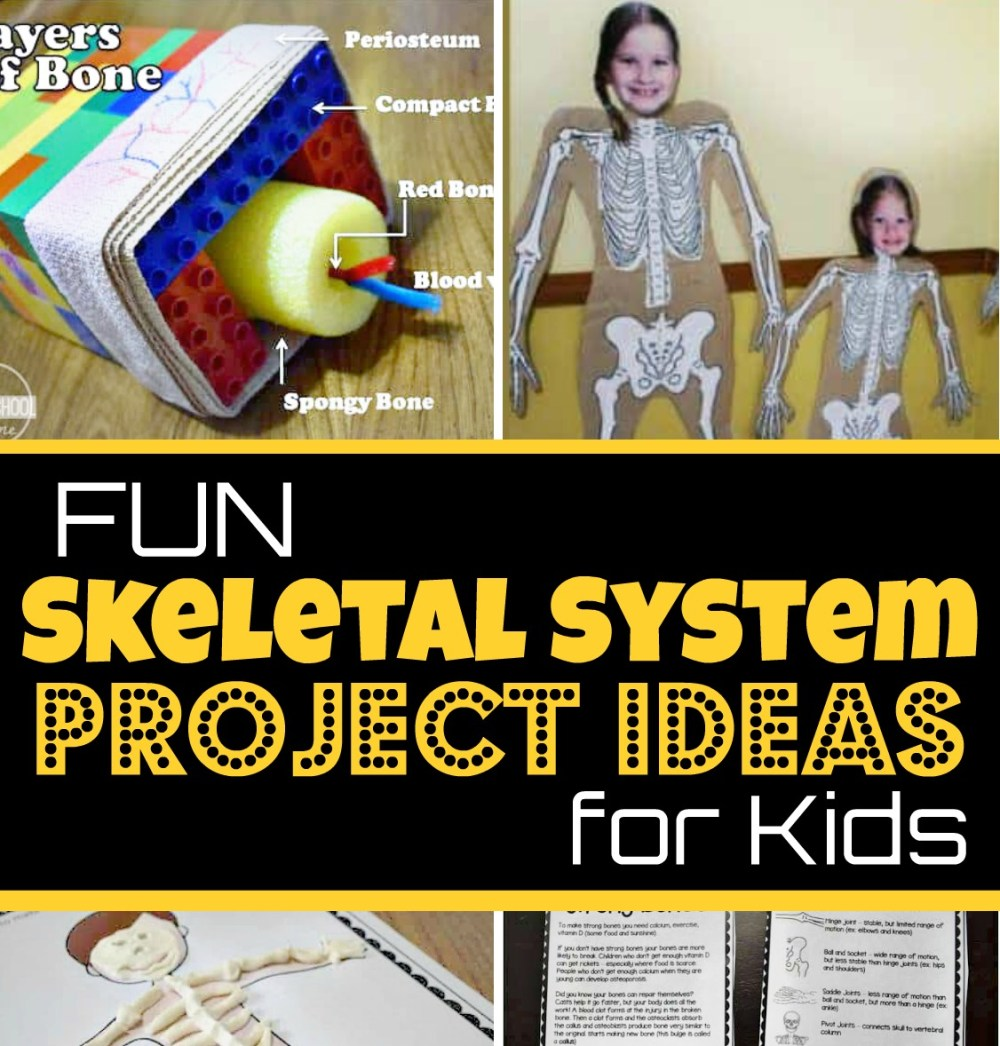 medium resolution of EPIC Skeletal System Projects Ideas for Kids
