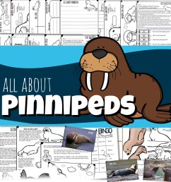 All About Pinnipeds for Kids - Seals [ 1013 x 983 Pixel ]