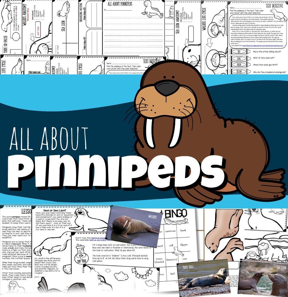 medium resolution of All About Pinnipeds for Kids - Seals