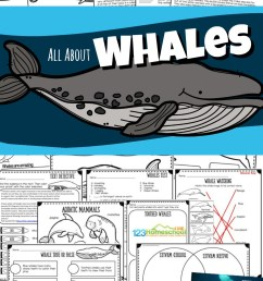 All About Whales Lesson w/ Facts [ 1553 x 981 Pixel ]