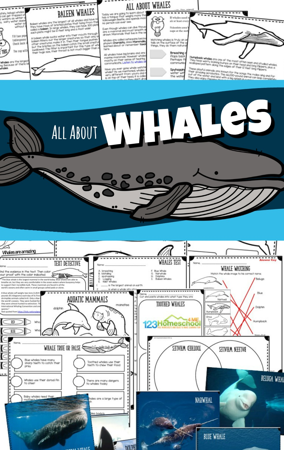 medium resolution of All About Whales Lesson w/ Facts