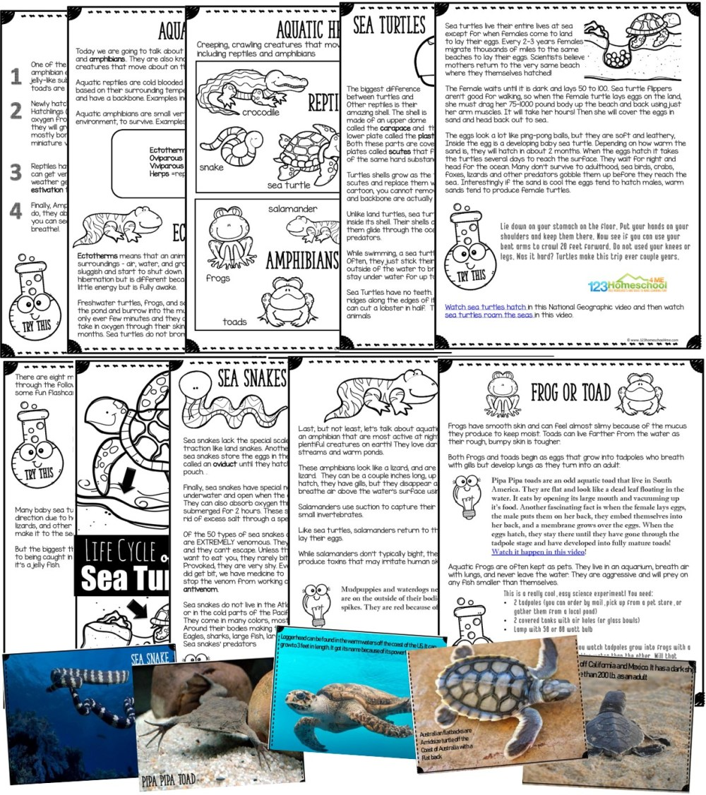 medium resolution of All About Herps   123 Homeschool 4 Me