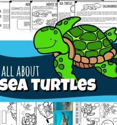 Sea Turtles for Kids (plus Sea Snakes [ 929 x 923 Pixel ]