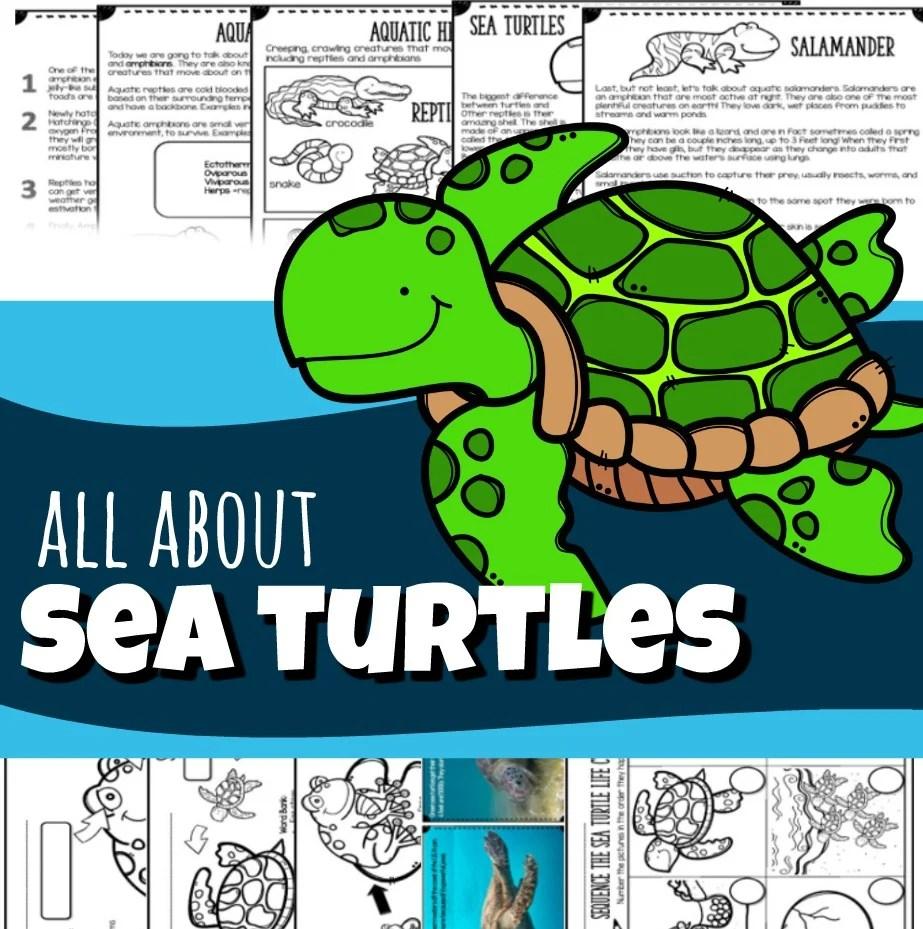 hight resolution of Sea Turtles for Kids (plus Sea Snakes