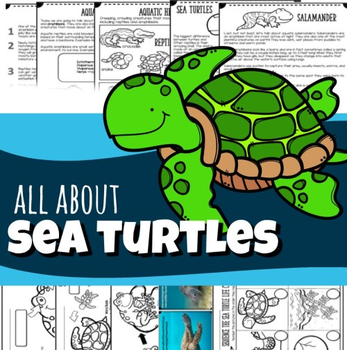 small resolution of Sea Turtles for Kids (plus Sea Snakes