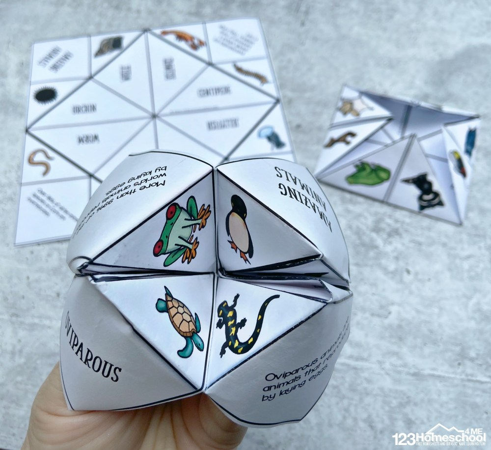medium resolution of Animal Classifications for Kids Cootie Catchers