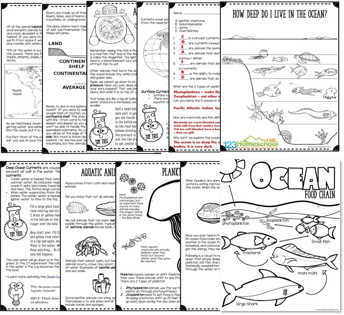 hight resolution of Ocean Animals UNIT   123 Homeschool 4 Me