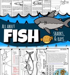 All About Fish [ 1382 x 690 Pixel ]