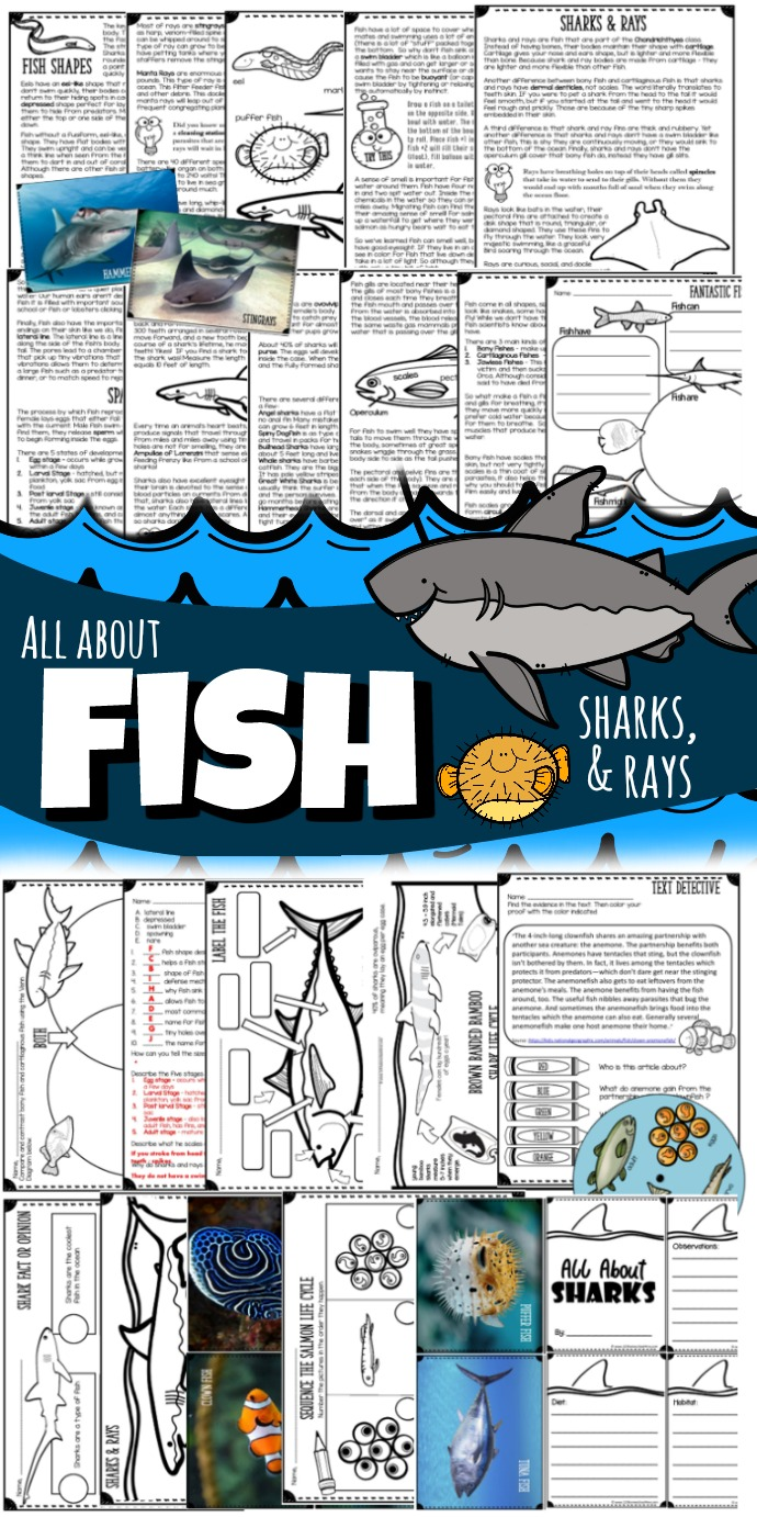 medium resolution of All About Fish