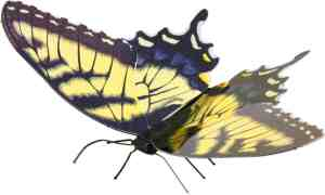 Metal Earth constructie speelgoed Tiger Swallowtail Butterfly