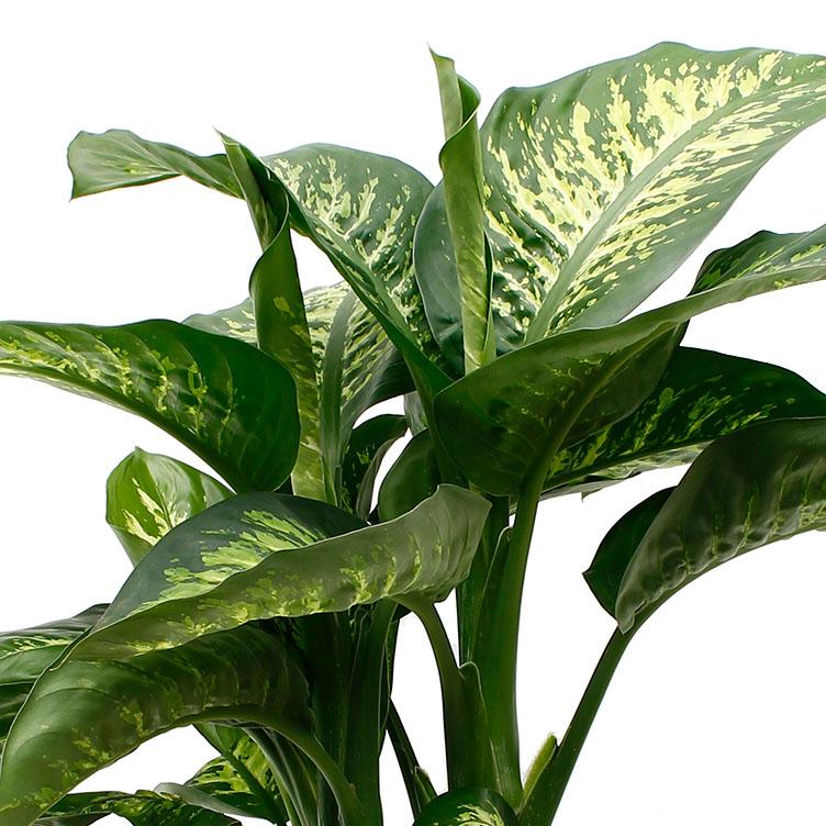 Kamerplanten encyclopedie  123plantennl