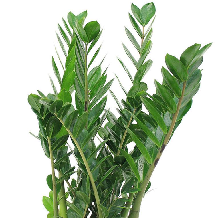 Kamerplanten die weinig water nodig hebben  123plantennl