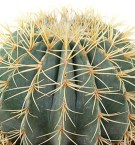 Cactus verzorging tips & informatie - 123planten.nl