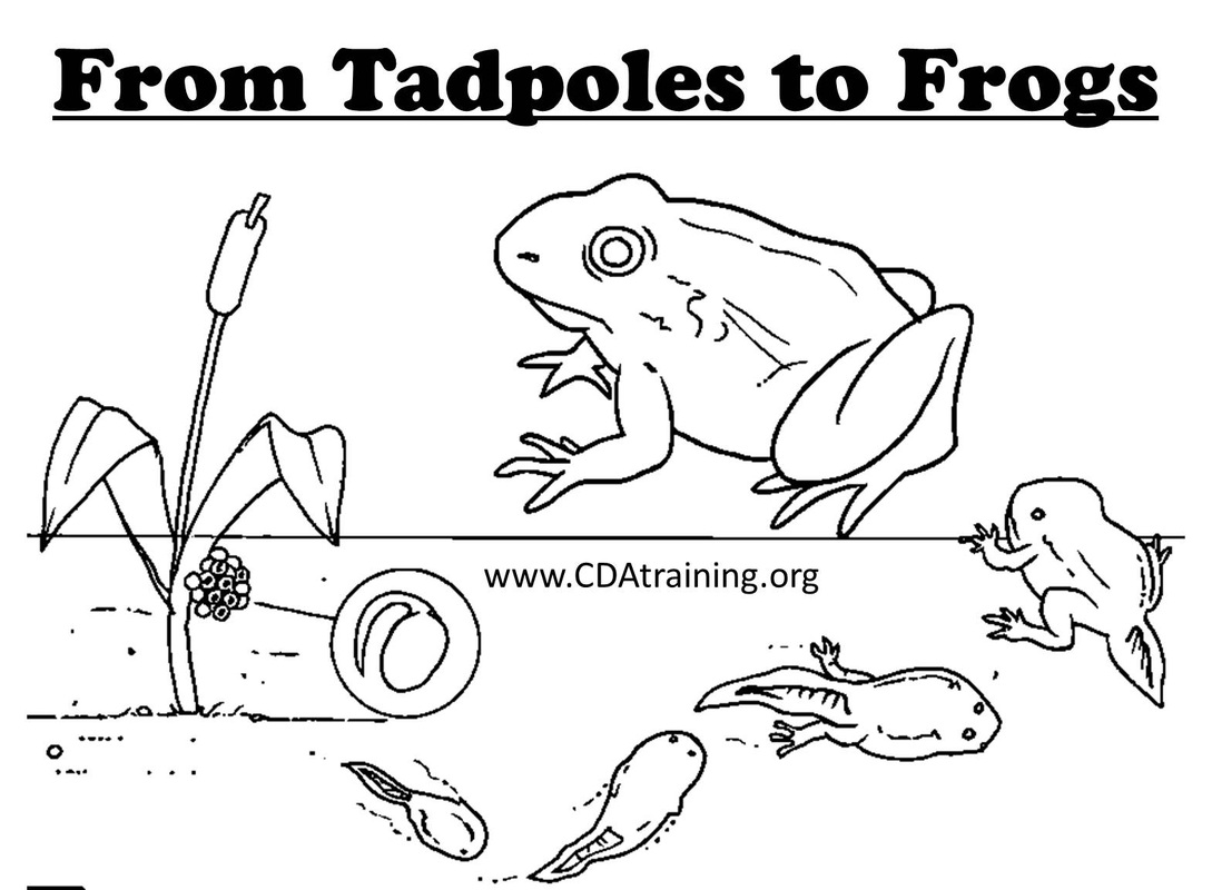 Frog Curriculum Theme
