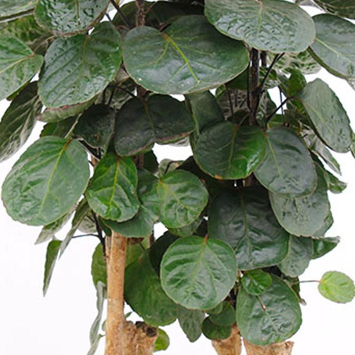 Zimmerpflanzen Arten