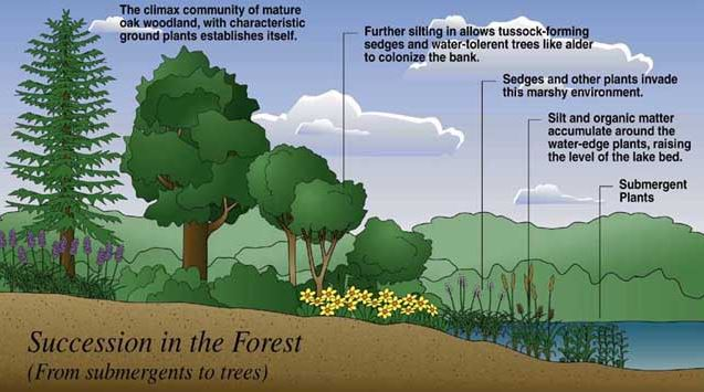 Responses of eastern hardwood forests. Forest Ecosystems 12storylibrary Com