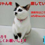 【緊急!情報求む】片山愁先生ちのネコの華ちゃんを探しています【拡散希望】