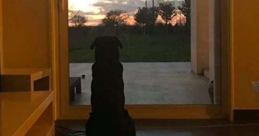 Sala : la photo bouleversante de sa chienne qui attend toujours son retour