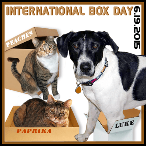 International Box Day 2015 BADGE