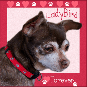 LadyBird, FOREVER