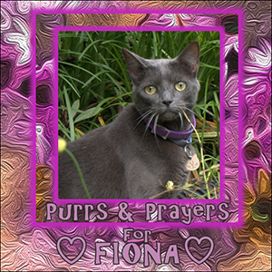 purrs-prayers-for-fiona-sidebar