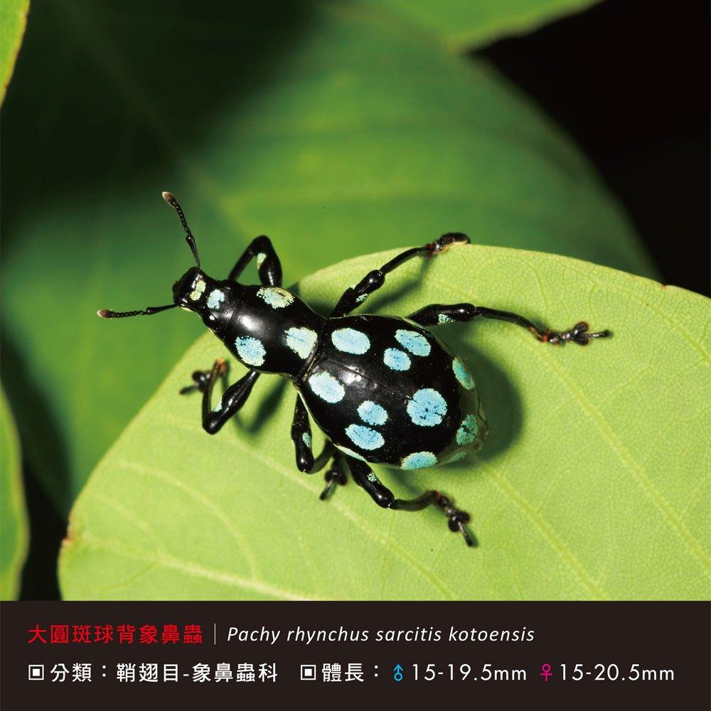 甲蟲小百科 - 168幼福童書網
