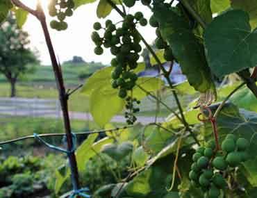 Lancaster Wineries
