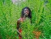 African herbman