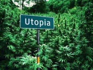 Marijuana is heaven