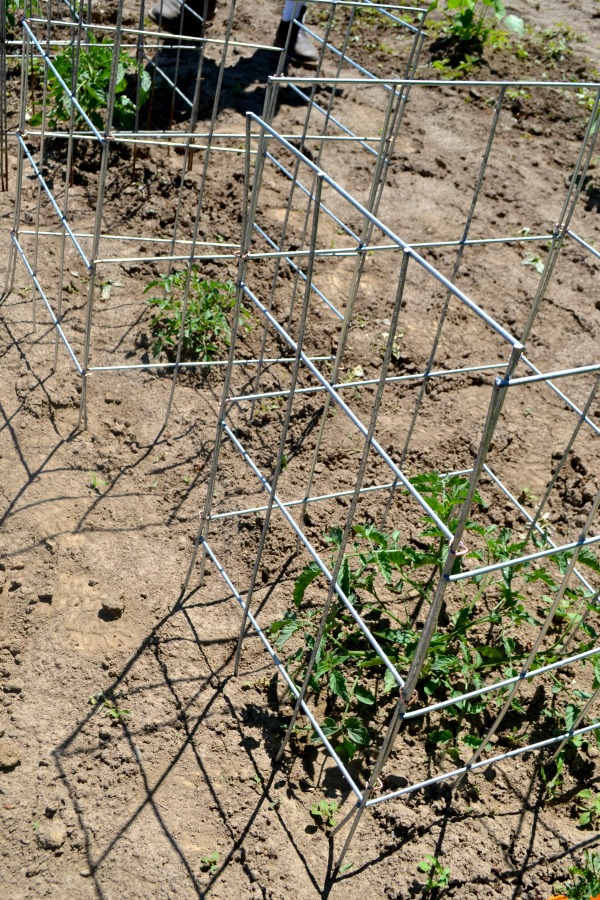 DIY tomato cages that are sturdy and hold up to tomato growth