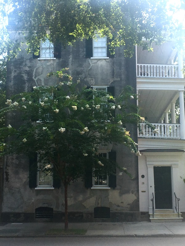 A white crape myrtle tree in front of a three story history home with a portico on the right side