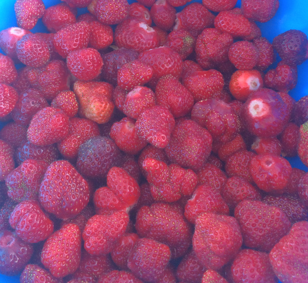 A bowl of freshly picked strawberries without stems on