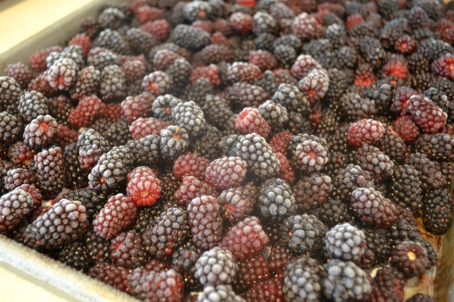 A rimmed cookie tray with frozen berries with a little white frost covering the berries