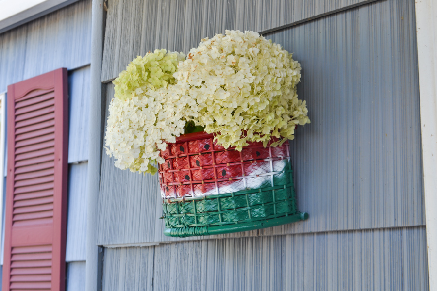 A close up of a watermelon painted basket with white hydrangeas out the top of the basket hanging on a blue house