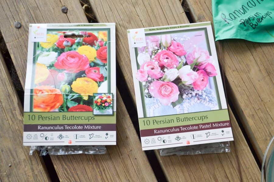 Two ranunculus packages laying on a wood deck with a green flag in the upper right corner