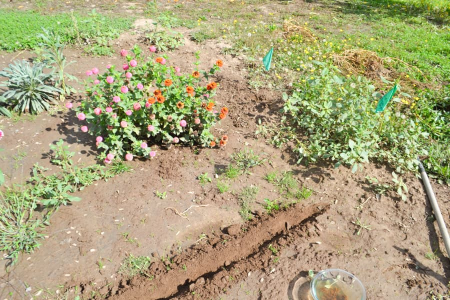 A close up picture of a dirt row in the ground with a flag and flowers growing in the background