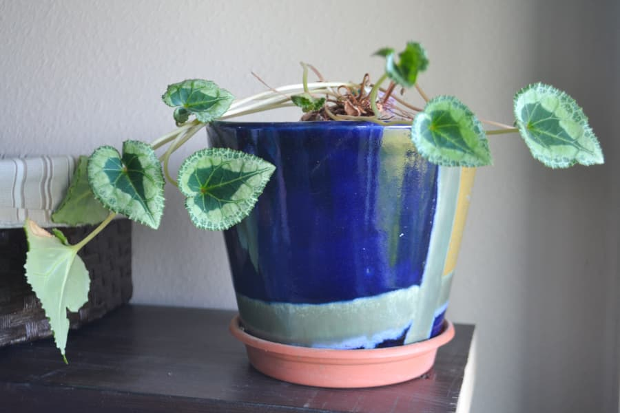 A green plant in a blue and green pot sitting on a shelf