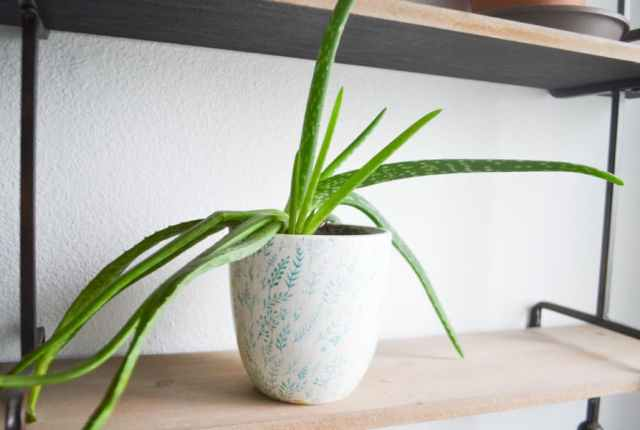 A close up of a white pot with a green aloe vera plant sitting on a shelf