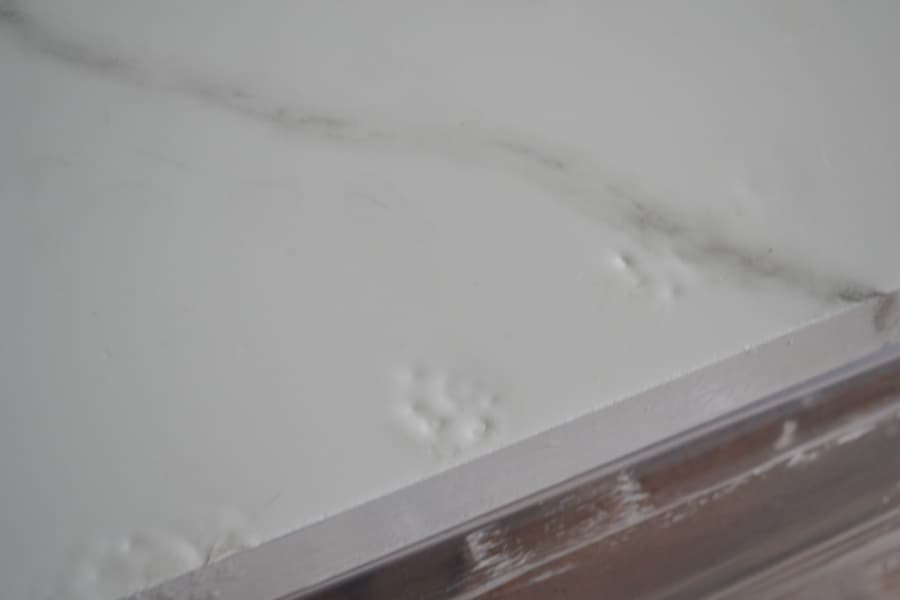 A close up of a cat print in an epoxy countertop