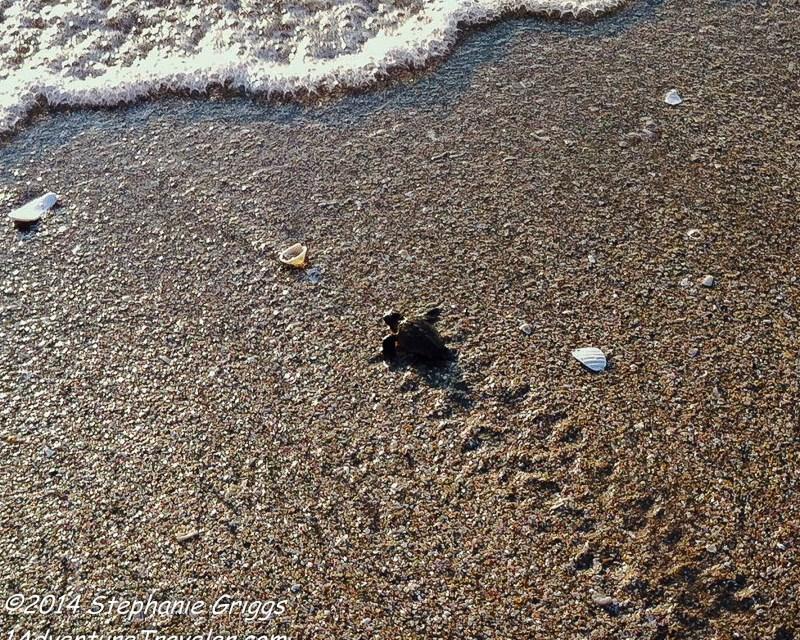 Sea Turtles of Florida