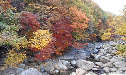Jirisan…Magnificent Fall Colors
