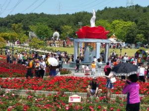 Rose Festival Ulsan